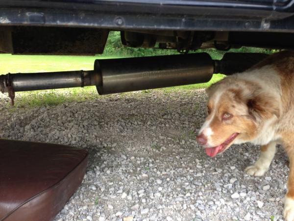 New exhaust. The dog helped.
