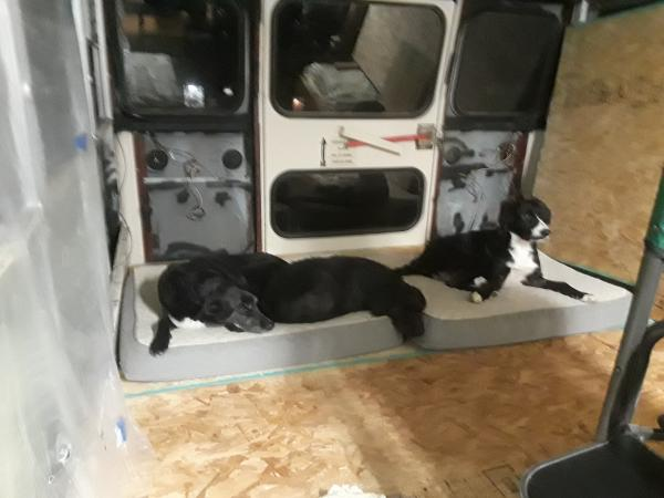 Dogs enjoying the bus with new floor.