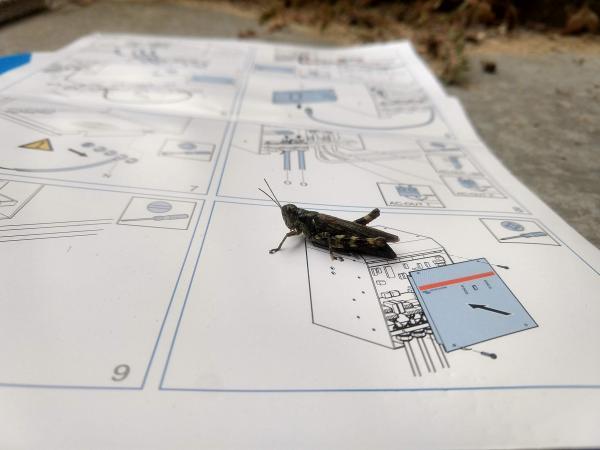 install grasshopper here