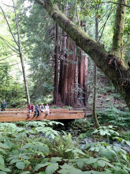 John Muir Woods