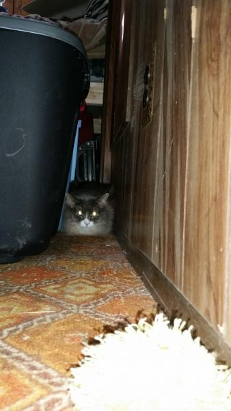 Her hiding spot for the first day until she figured out how to get under the bed.